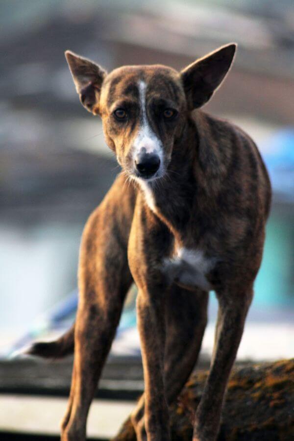 Street Dog photo