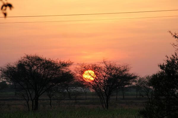 Sunset Trees photo