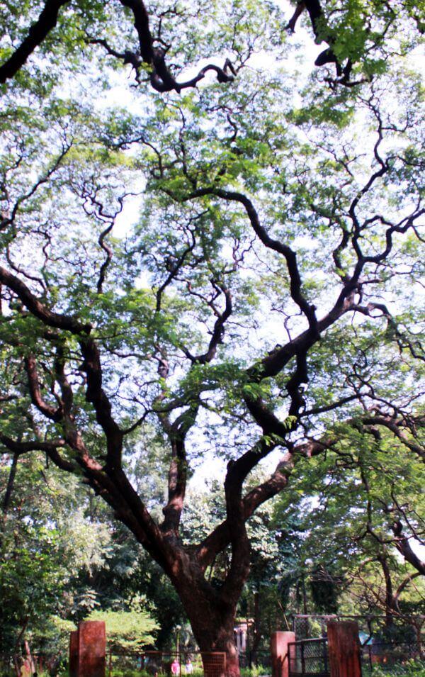 Tree Large photo