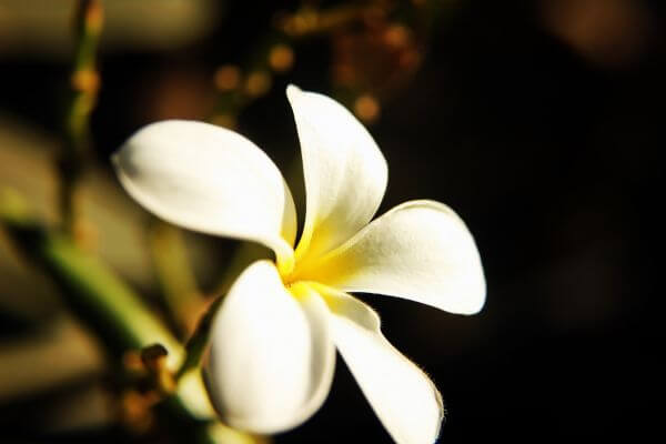 White Flower Closeup photo