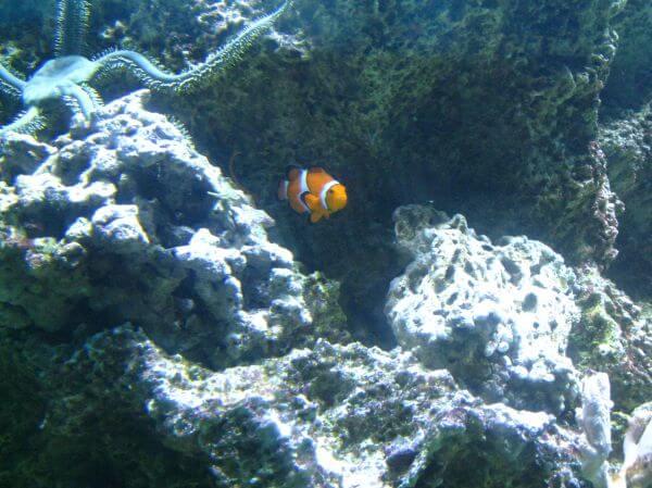 Clown Fish Aquarium photo