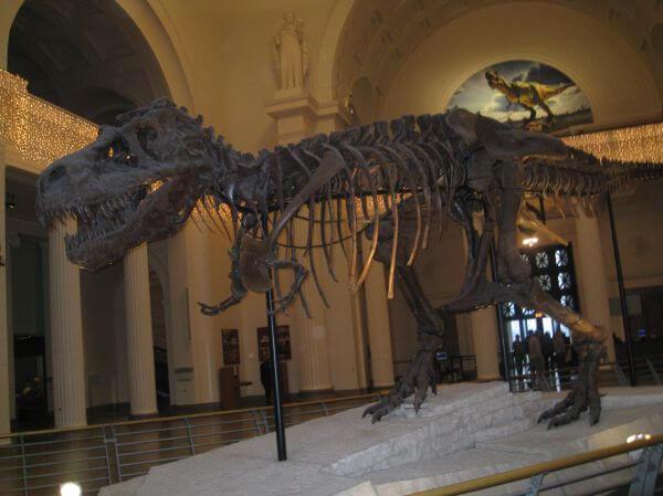 Dinosaur Skeleton Fossil Museum photo