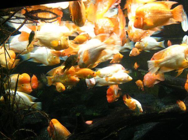 Lots Of Fishes Aquairum photo