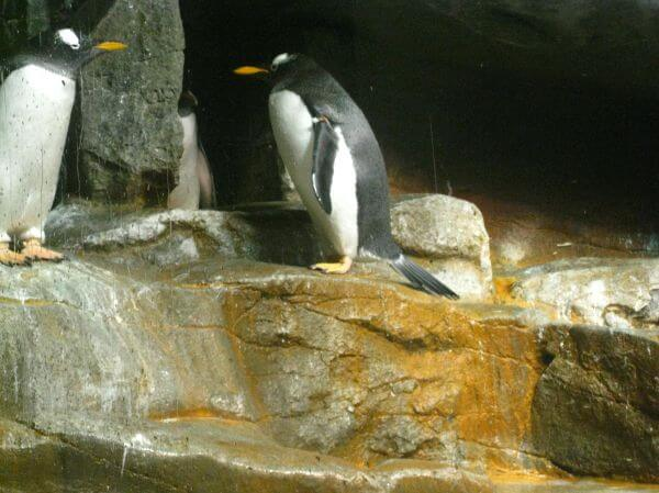 Penguin Sea World photo