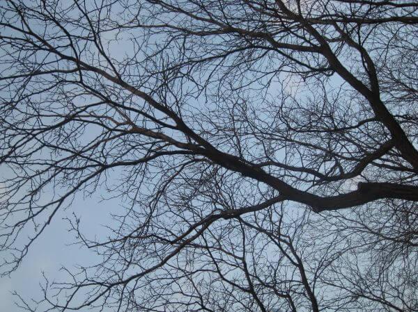 Trees Blue Sky photo
