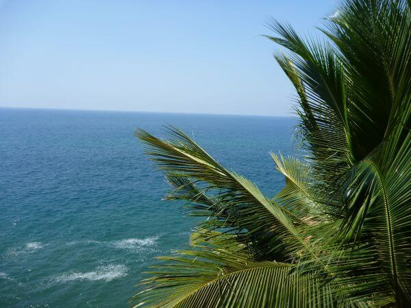 Palm Tree Blue Sea photo