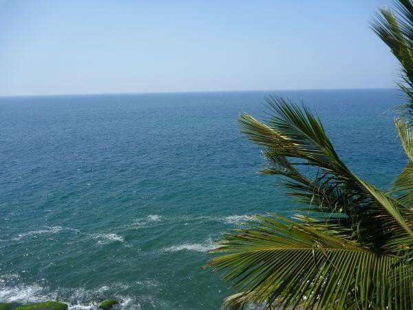 Palm Trees Dark Blue Sea photo
