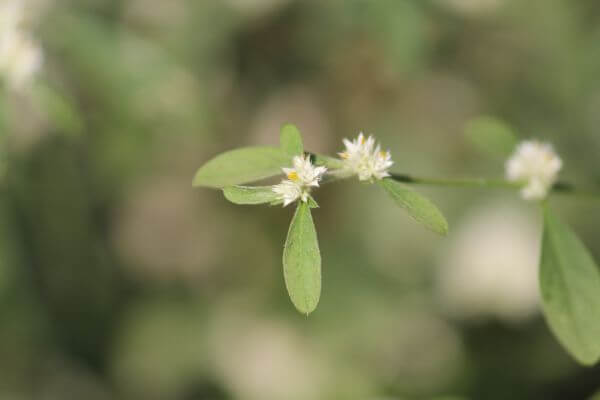 Bush Leaf Flower White photo