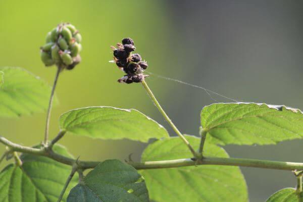 Flowering Plant photo