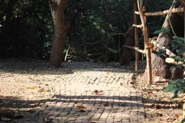 Garden Path photo