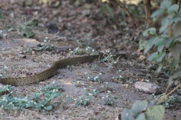 Snake Slithering photo