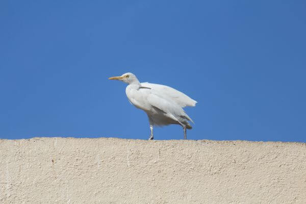 White Bird Beautiful photo