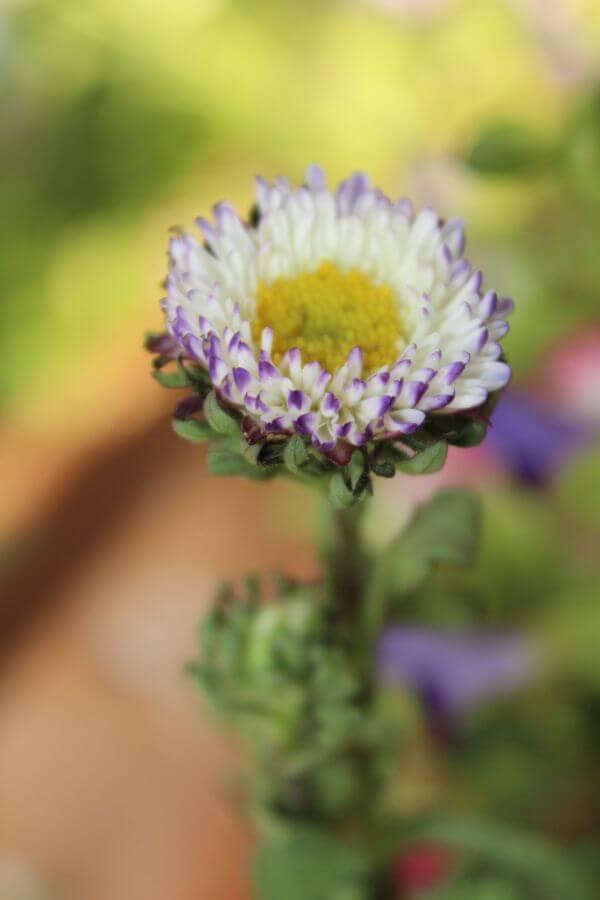 Beautiful Flower photo