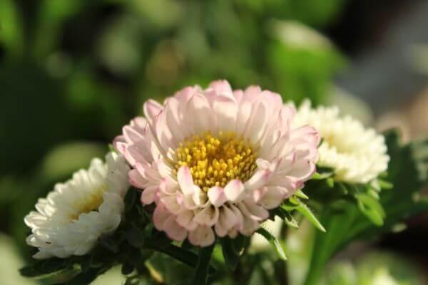 Beautiful Light Flower 2 photo