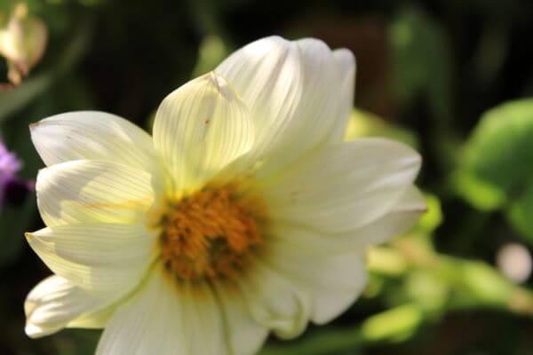 Flower White Greenish photo
