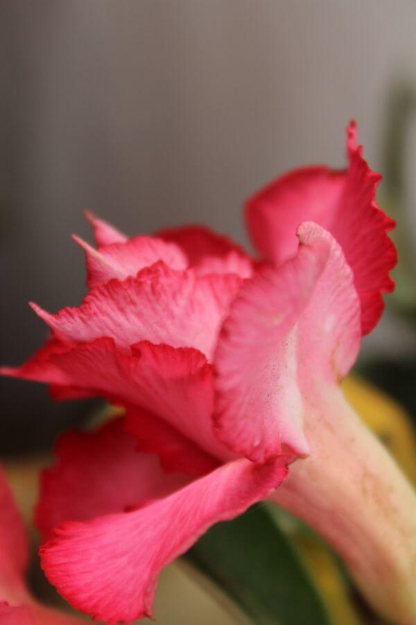 Pink Flower Floral photo