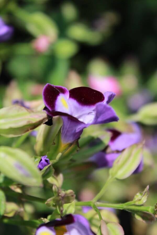 Purple Violet Flower photo