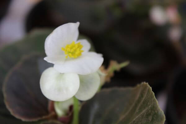 Small White Flower photo