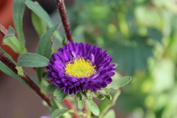 Violet Flower Yellow photo