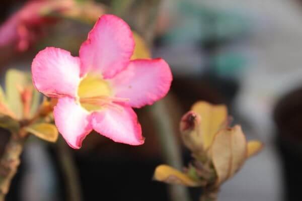 Wild Flower Pink photo