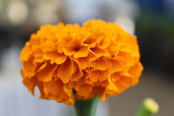 Yellow Orange Flower Lovely photo