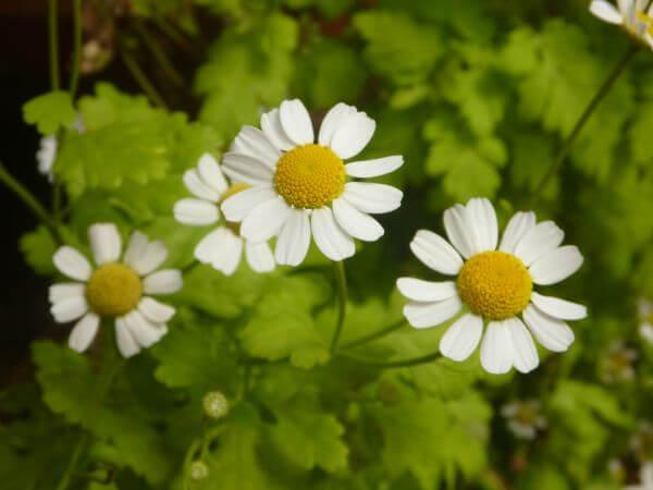 Beautiful White Flowers Garden photo