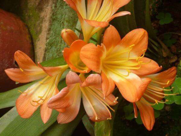 Nice Flower photo