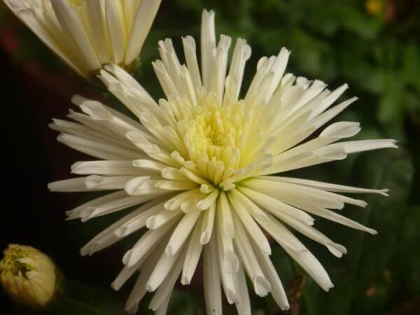 Nice Looking Flower photo