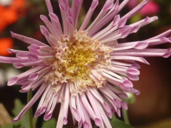Weird Pink Flower photo