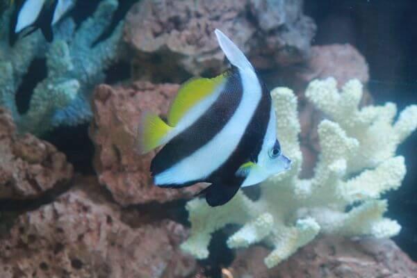 Angel Fish Tank photo