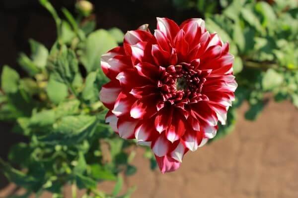 Bloom Flower Lovely photo
