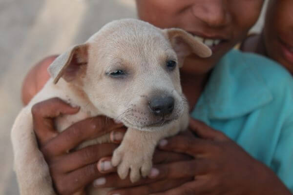 Boy Holding Puppy photo