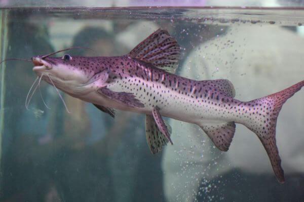 Catfish Water Tank photo