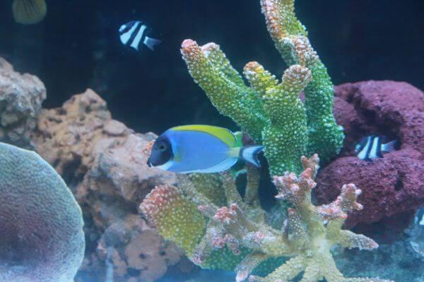 Coral Water Tank Fish photo