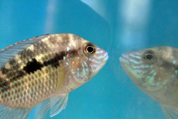 Fish Reflection Water Tank photo