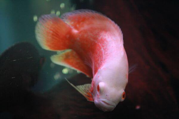 Fish Weird photo