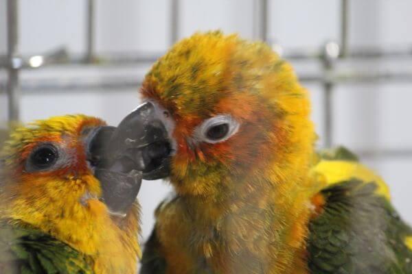 Love Birds photo