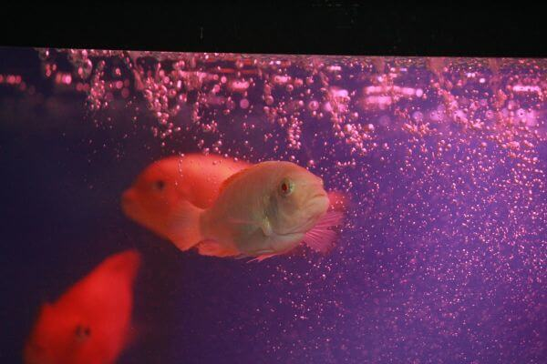 Purple Water Fish Orange photo