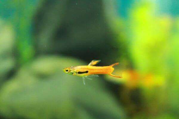 Small Fish photo
