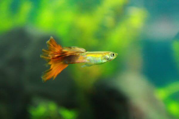 Small Green Fish photo
