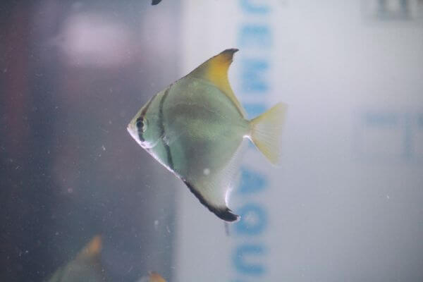 Sole Fish photo