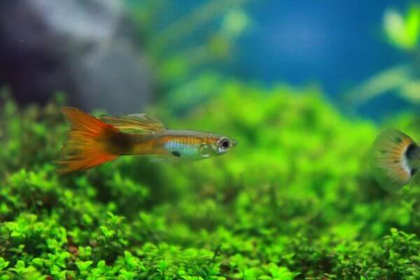Tiny Fish Swimming photo