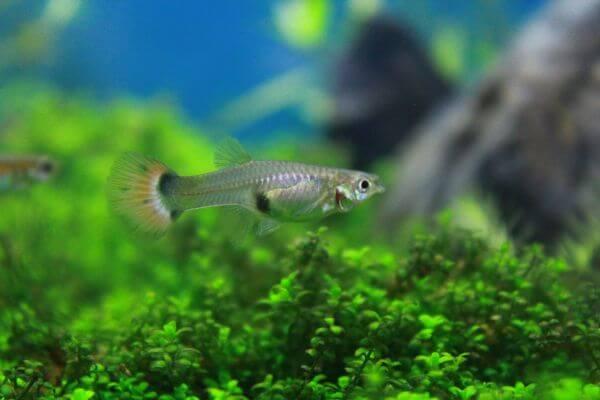 Tiny Fish photo