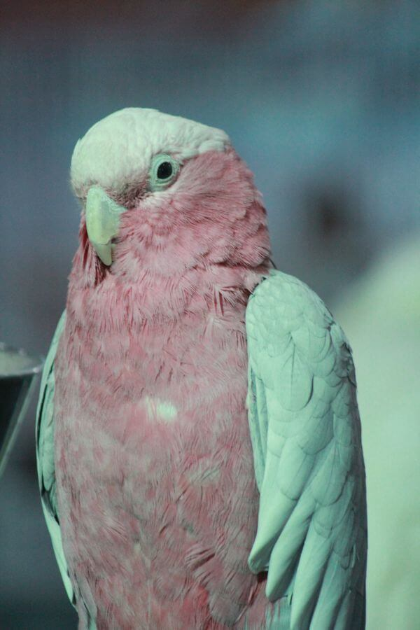 White Pink Bird photo