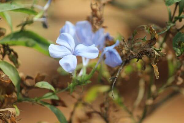 Dried Leaves Flower photo