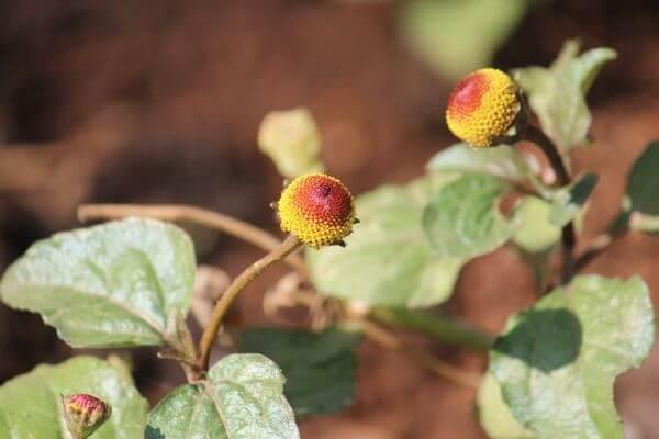 Flower Pod photo