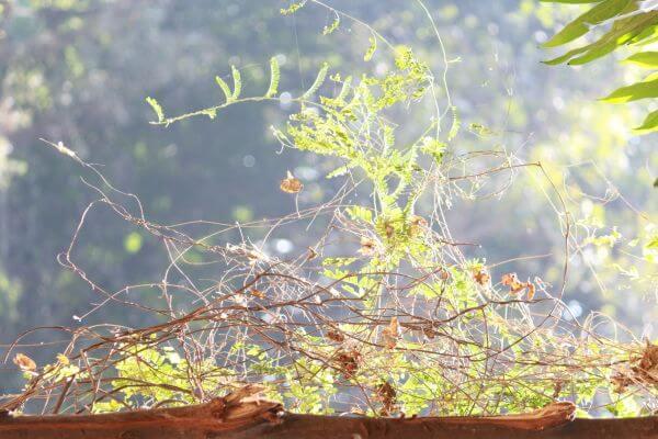 Garden Bush Sunlight photo