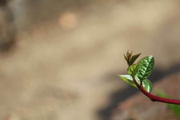 Single Leaf Branch photo