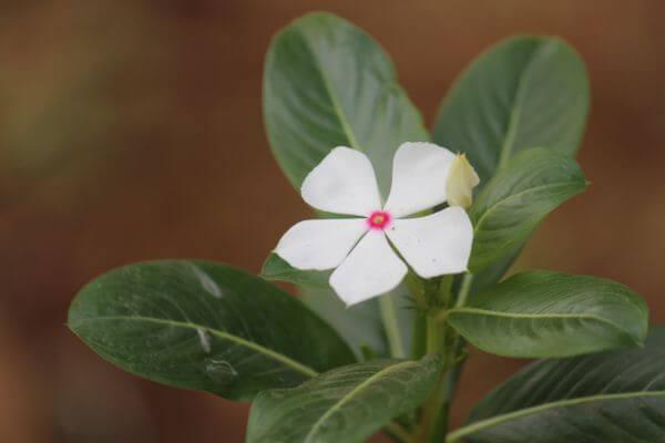 Single White Flower photo