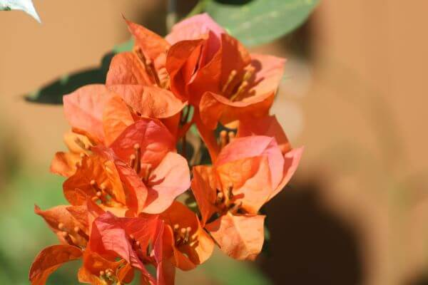 Yellow Orange Leaf Flower photo
